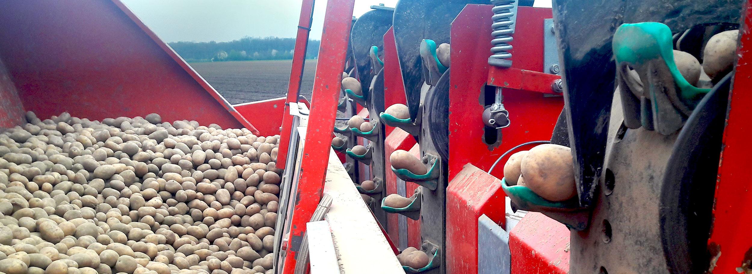 biolandbau_biogemuese_kemper_anbau_002